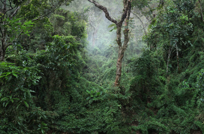 Botanical observation © Camilo Echavarría